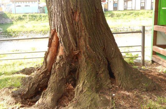 drvece_2