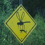Обавештење о запрашивању комараца