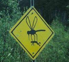 Запрашивање комараца данас