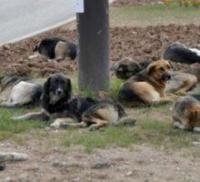 Системско решавање проблема уједа паса луталица